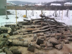 Gherla winter wood 1